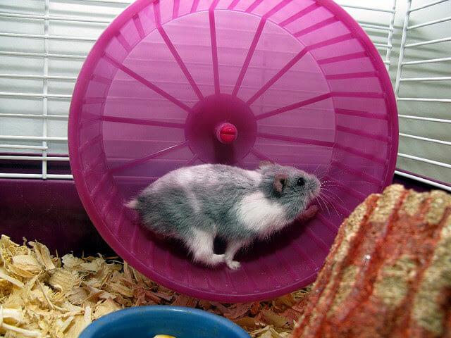 Strah od promjene ili Što je tako posebno u utrci štakora