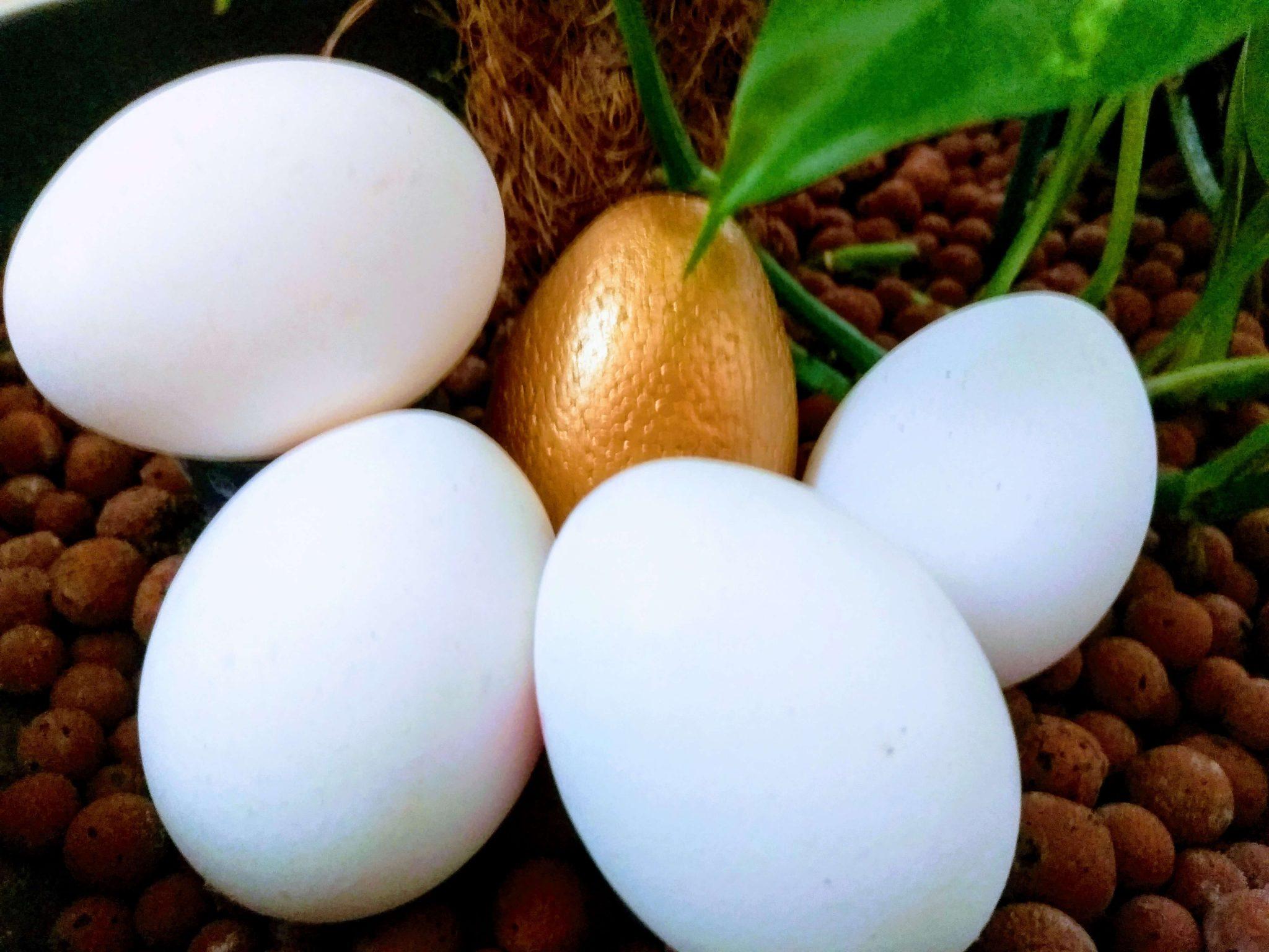 Kako postići da novac radi za vas? Ili zašto biste trebali nabaviti gusku koja nese zlatna jaja!